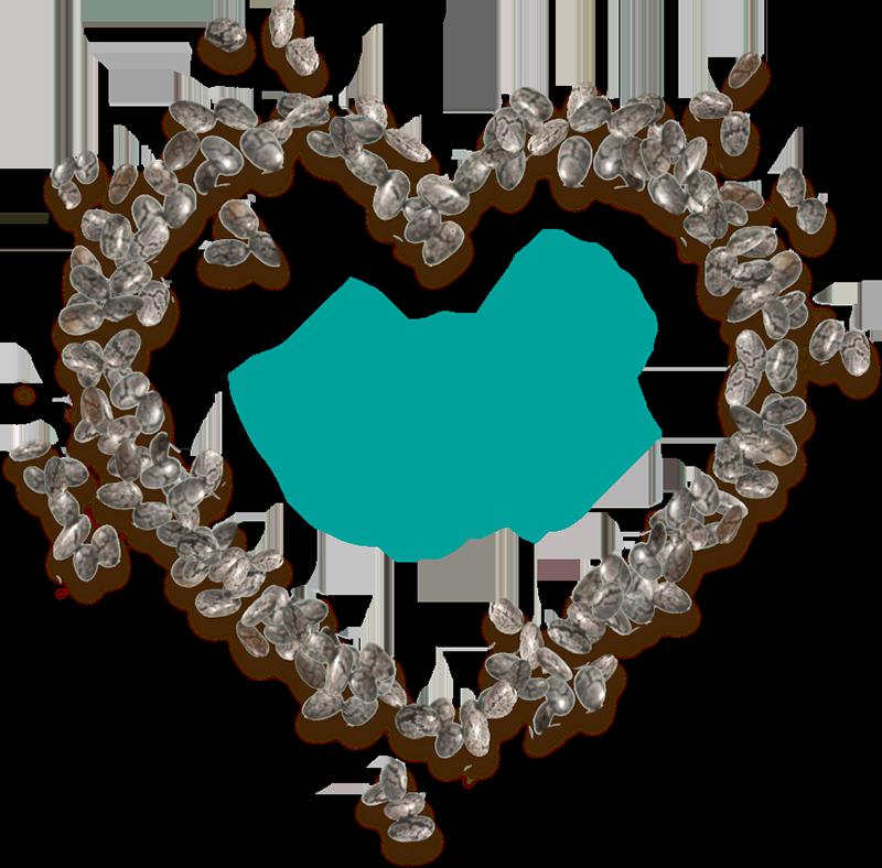 La Chia